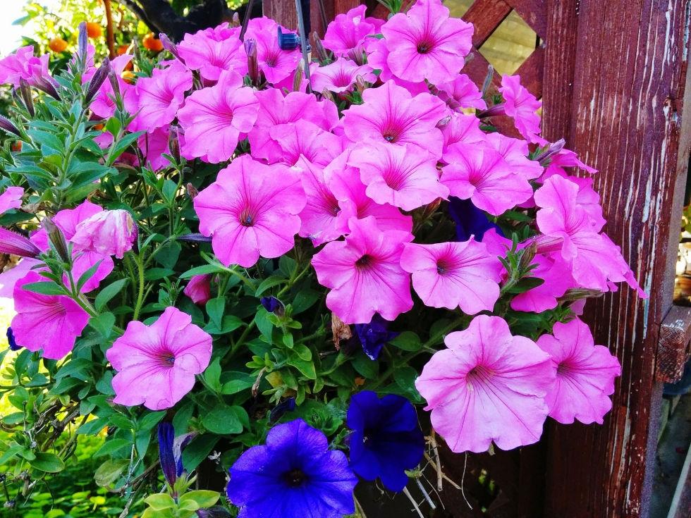 Con l 39 arrivo dell 39 estate fioriscono gli sconti lacme for Piante da esterno resistenti al freddo